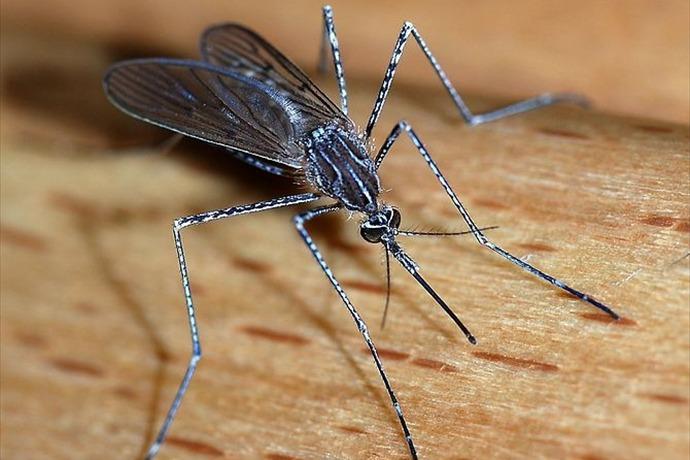Mosquitoe_-1273598992324278419