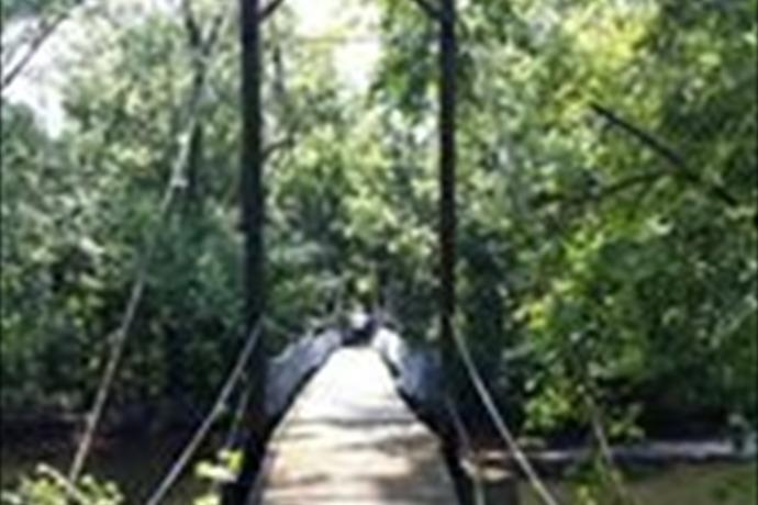 Swinging Bridge_-3303501266355992855