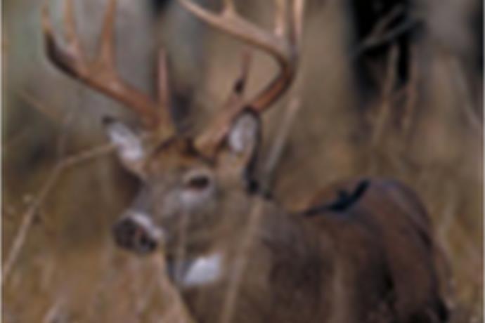 PA Deer Season Underway_-7917876996389731