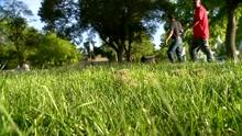 Grass mowing_1463088899588.jpg
