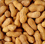 Peanut Protein in Dust May Raise Allergy Risk _20160108114201-159532