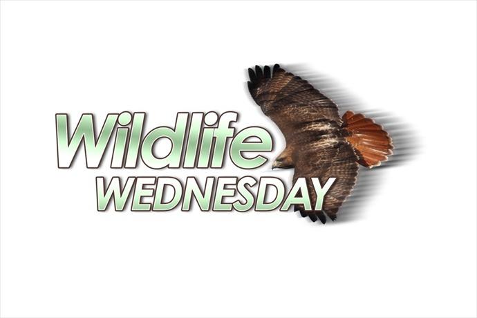 Wildlife Wednesday_2144945579699487278