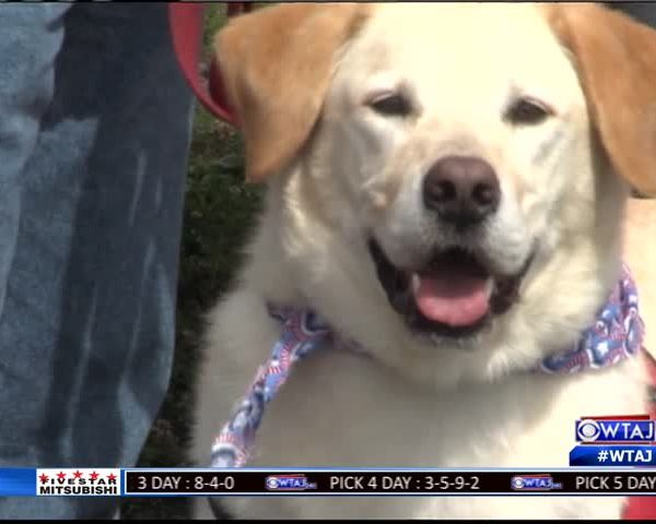 Service dog helps fundraise_69651030-159532