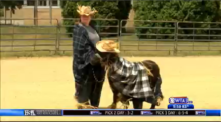 horse costume contest clearfield county fair 1