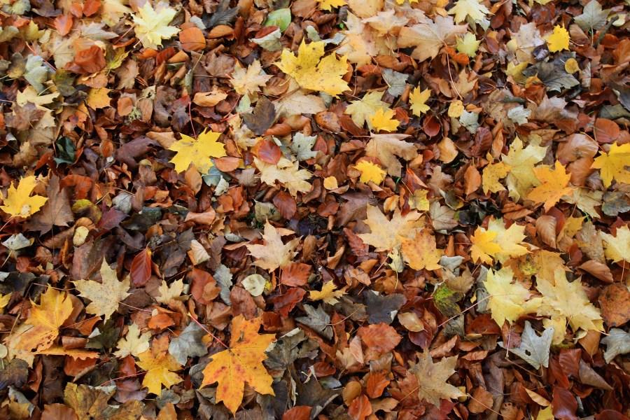 fall leaves autumn leaf