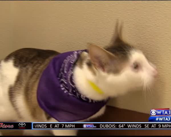 Domestic violence event to focus on pet abuse_94731362-159532