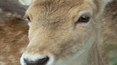 deer-jpg_20160929135014-159532