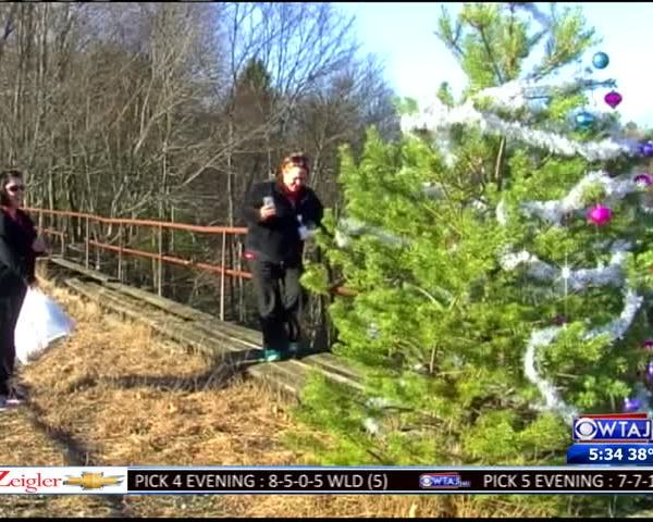 Duo Re-Decorates Tree After Vandalism_20766488