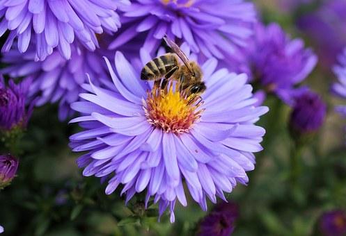 bee on flower_1484607465098.jpg