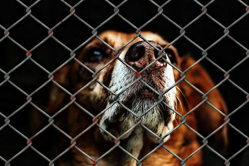shelter dog_1493409614773.jpg