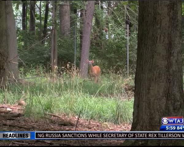 Bedford- Blair counties have highest CWD cases in PA_31150037