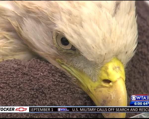 bald eagle update2_83409944