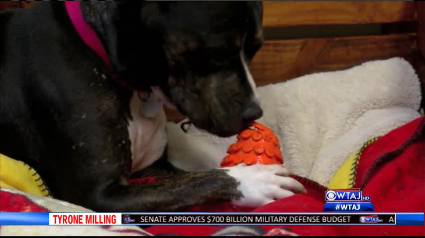 Centre County PAWS new rescues