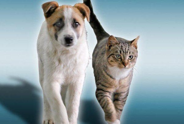 dog-cat_1520252964910.jpg