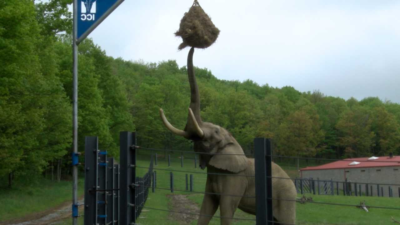 elephant hay feeder_1527115227990.jpg.jpg