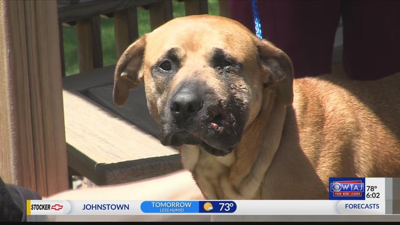 Fundraiser for dog shot