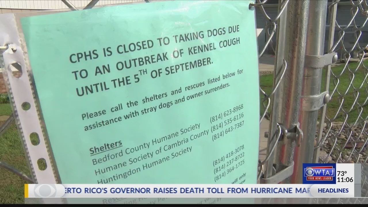 Animal shelter needs volunteers, supplies after kennel cough outbreak