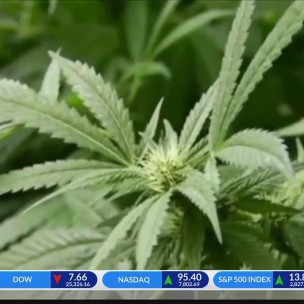 Johnstown locals react to medical marijuana plant