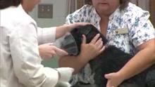 dog with brian cancer_1535463129456.jpg.jpg