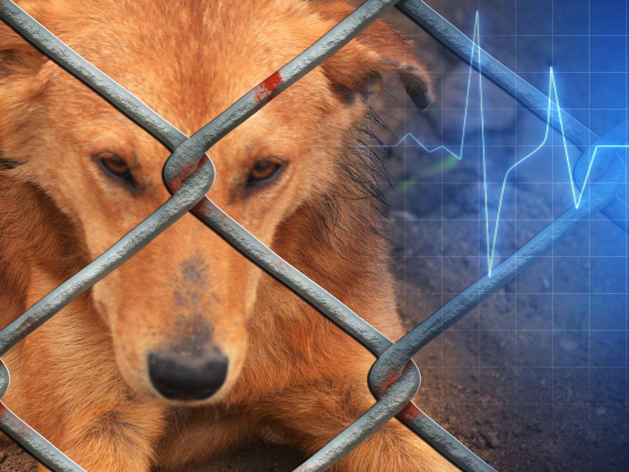 animal dog health_1539736391268.jpg.jpg