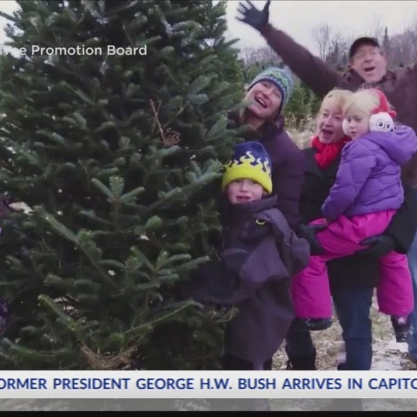 Finding_the_perfect_Christmas_tree_0_20181205011808