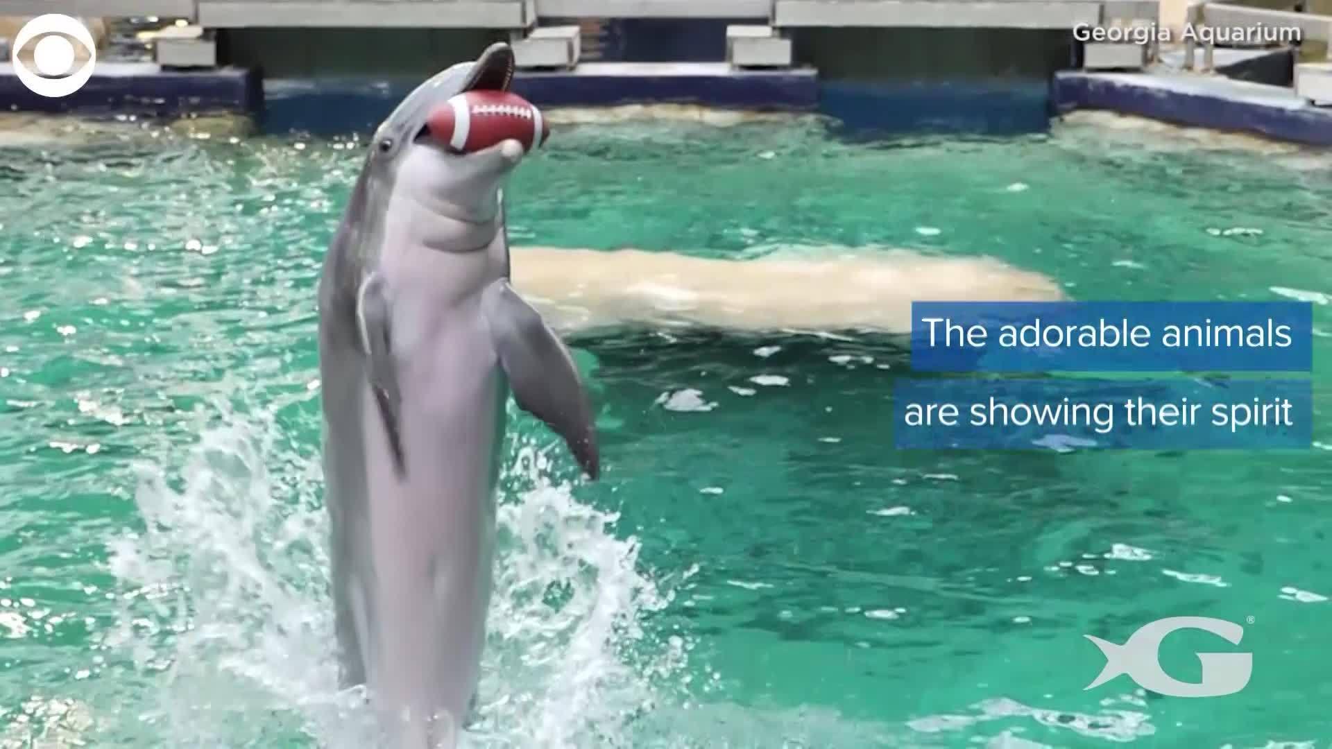 WEB_EXTRA__Georgia_Zoo_animals__enjoy__t_0_20190128192330