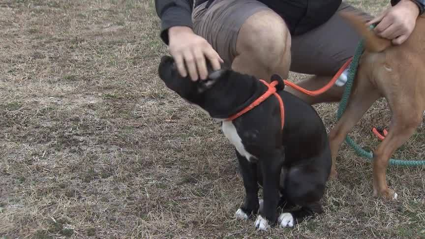PetSmart_Pit_Bully_Policy_0_20190219174724