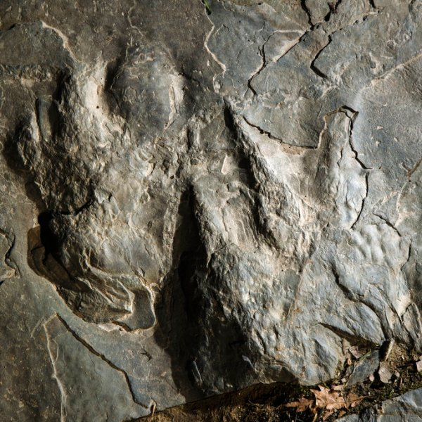 Dinosaur Tracks-Valley Forge_1551905968803