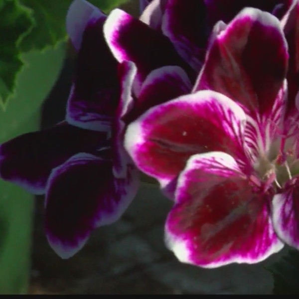 National_plant_a_flower_day_0_20190312172713
