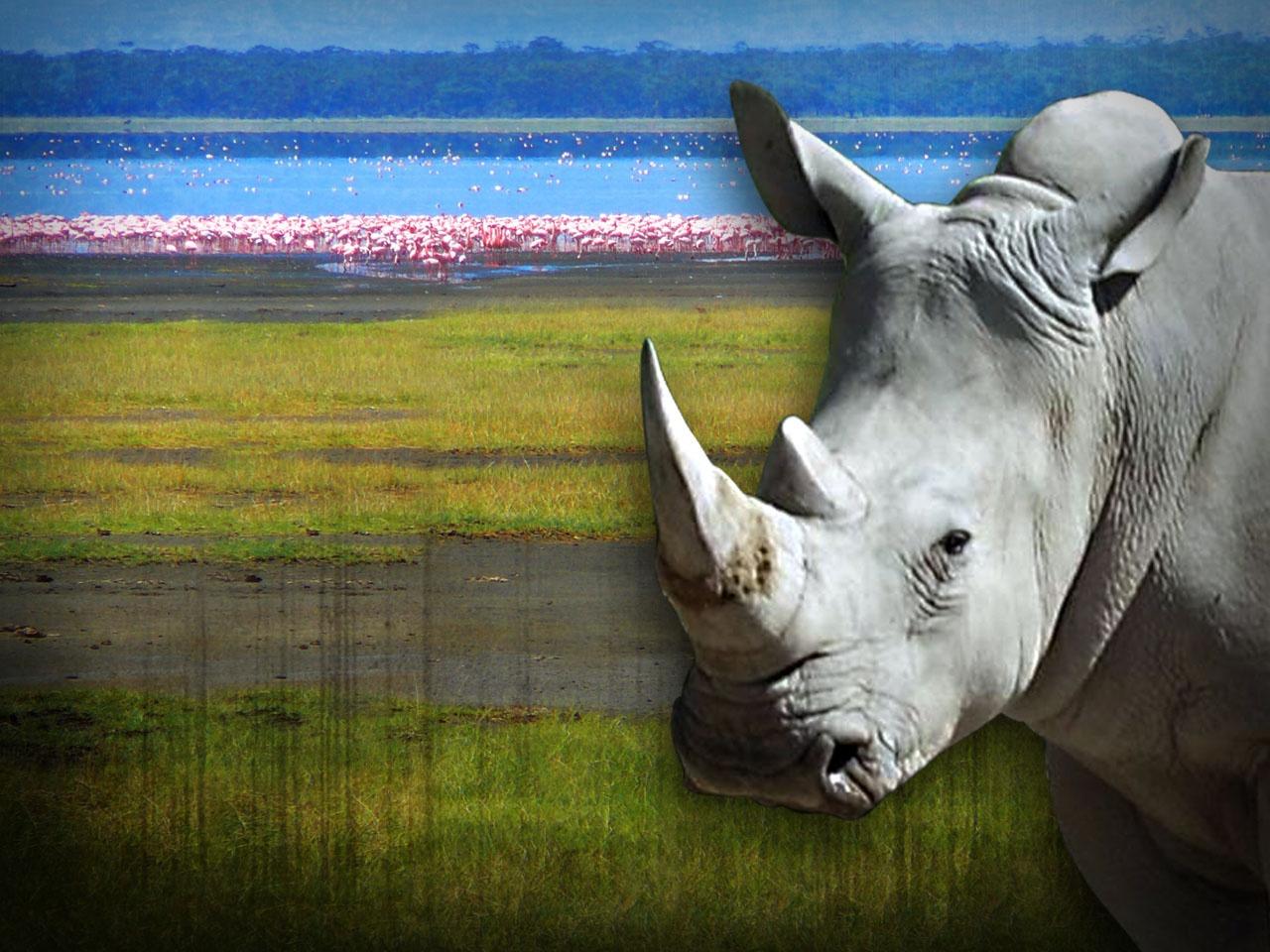 White Rhino_1554754484537.jpg.jpg