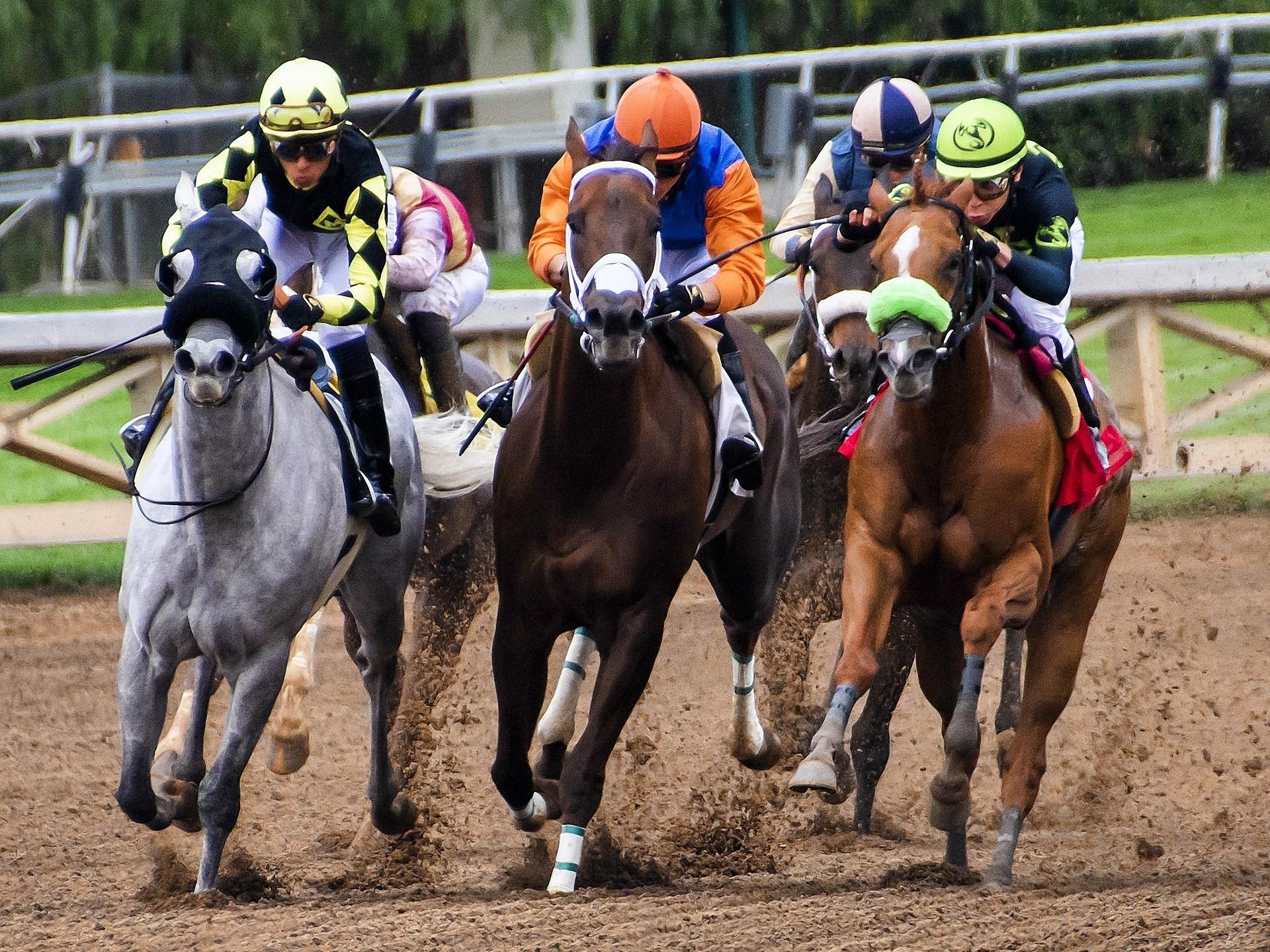 horses-3811270_1920_1556592146994.jpg
