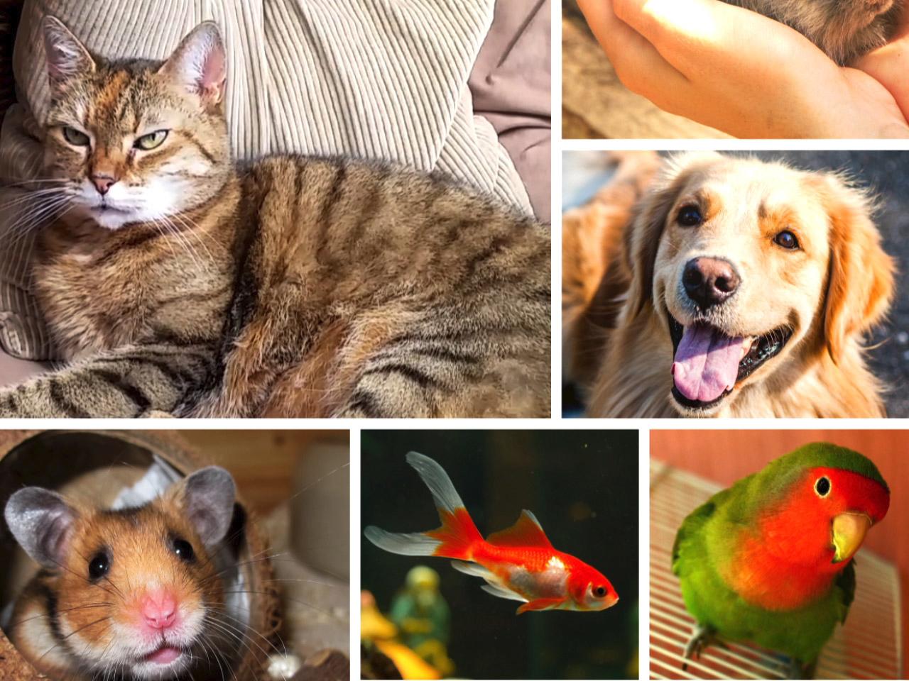 pets family_1554759128183.jpg.jpg