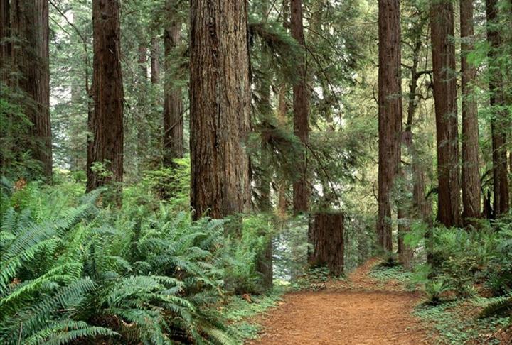 trail_1555430307513.jpg