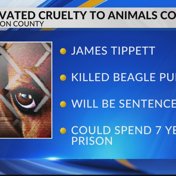 Aggravated Cruelty to Animals Conviction