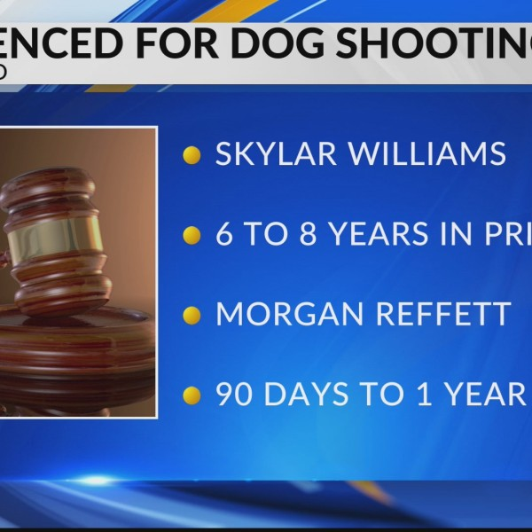 Man sentenced in Clearfield County dog shooting