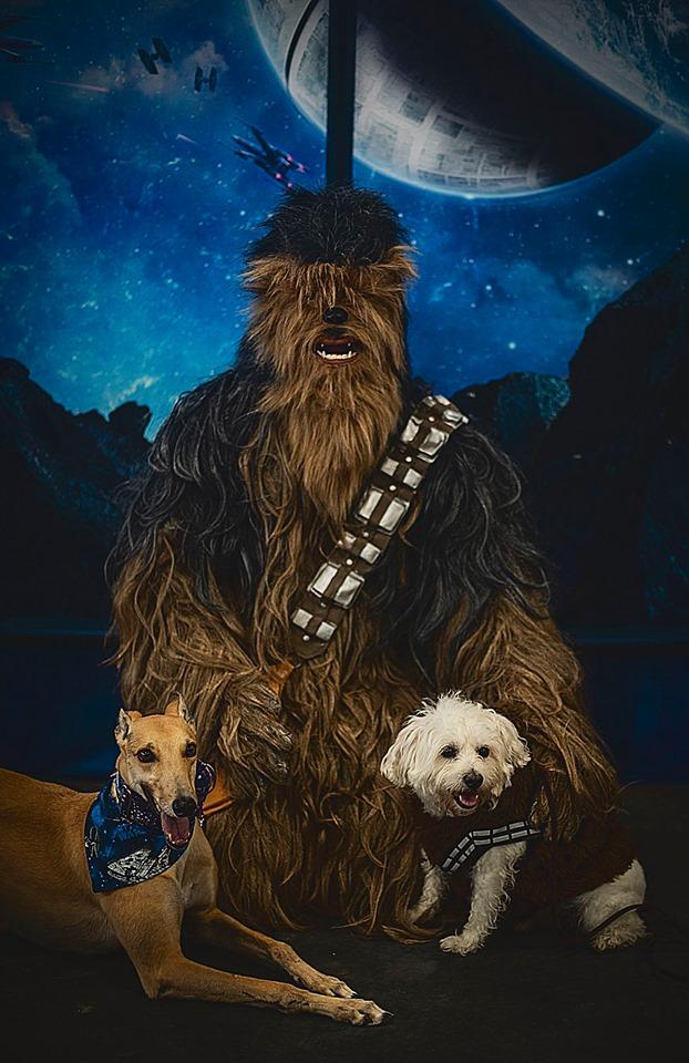 Star Wars Pet Valu_1557178500514.jpg.jpg