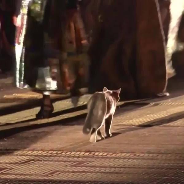 WEB_EXTRA__Cat_Walks_the_Runway_0_20190502005227