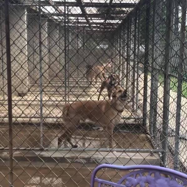 WTAJ_Originals__Local_animal_rescue_bene_0_20190510010252