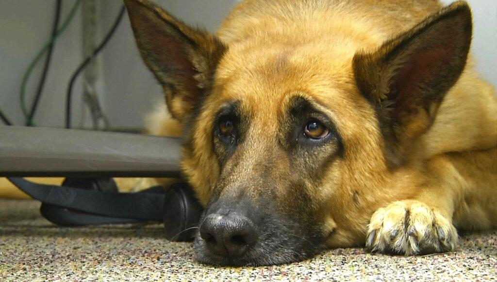 Puppy Dog Eyes Evolution_1560799609211