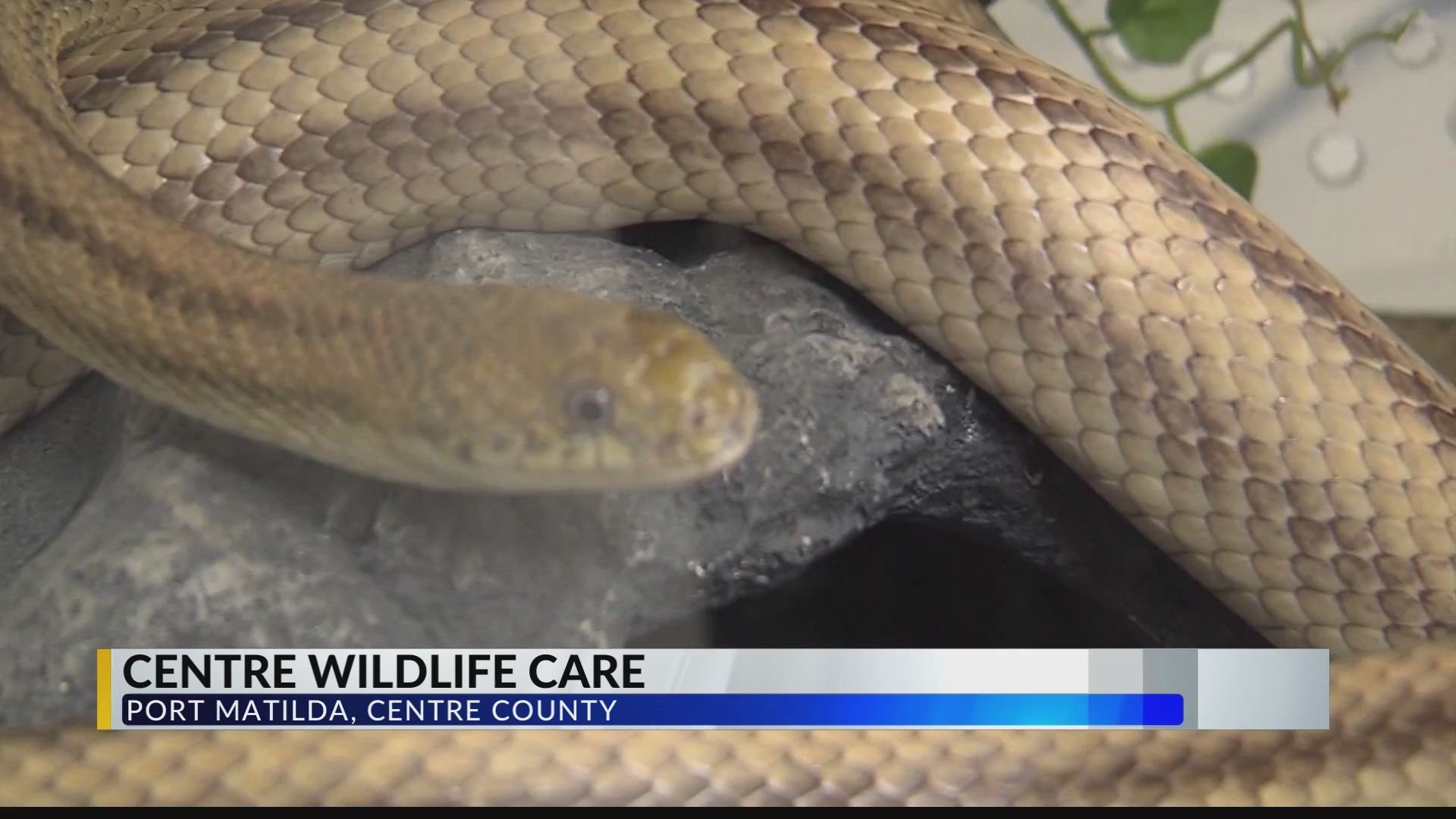 Centre_Wildlife_Care_Reopening_0_20190608033452