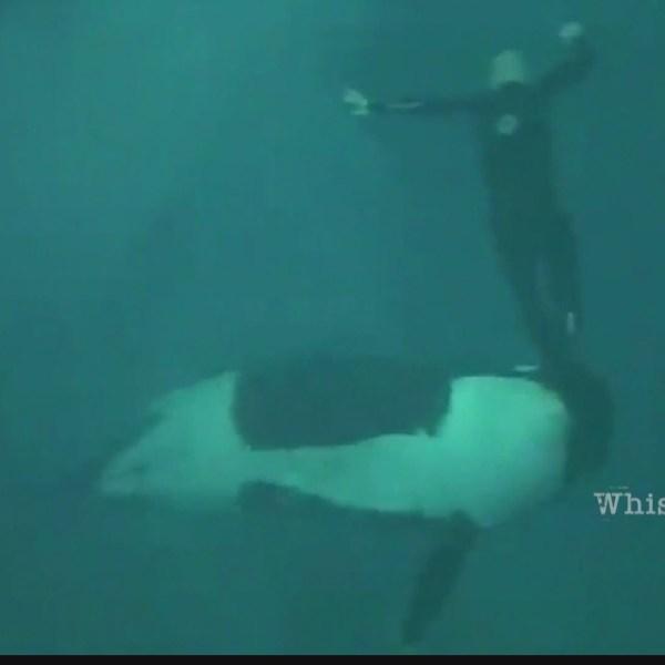 Seaworld Whistelblower