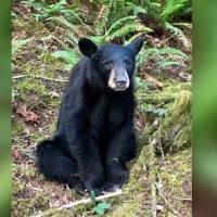 black bear killed_1560852280271.JPG-846652698.jpg
